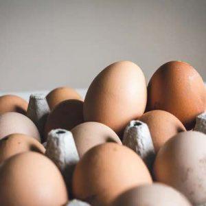 Huevos ecologicos Ous Ecologis