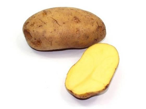 107 Patata Blanca Agria