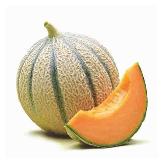 1291 Melo Cantalup